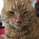 Ginger, 10/19/10-11/30/17