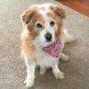 Bailey: 3/09/08-7/15/18