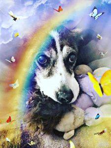 hamilton pet meadow dog